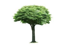 Chiltern Tree & Gardening