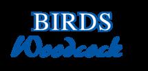 Birds Woodcock