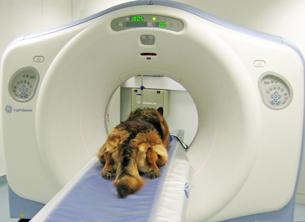 Main photo for Highcroft Veterinary Centre