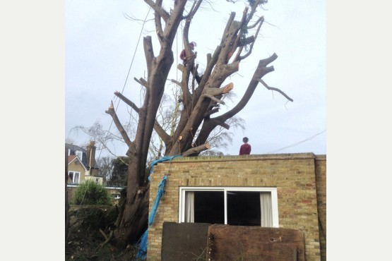Main photo for Westgate Tree Services Ltd